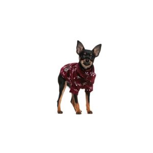 Miniature Pinscher Puppies Petland San Antonio